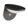 Philips 17808/93/16 - LED exterior Solar lampa cu senzor DUSK 1xLED/1W/3,7V